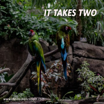 Group Parrots (1 of 1)